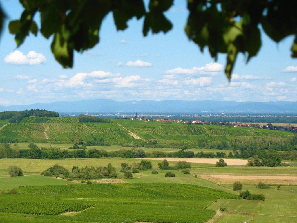 vue sur le Fronholz Epfig